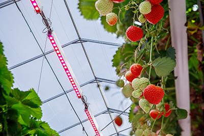 Philips GreenPower LED toplighting
