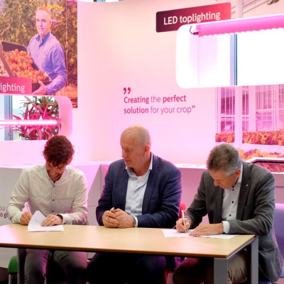 All year round strawberry cultivation drives strategic partnership between Signify and Fragaria Innova